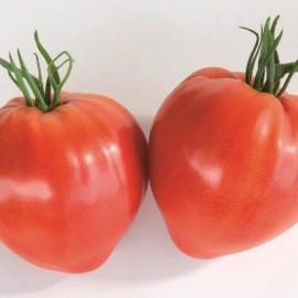 Tomate Coeur de Bœuf