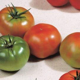 Tomate Gordal