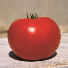Tomate Loriane