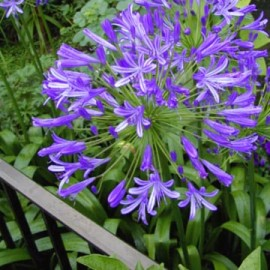 Plantes vivaces p pini res ruiz for Catalogue plantes vivaces