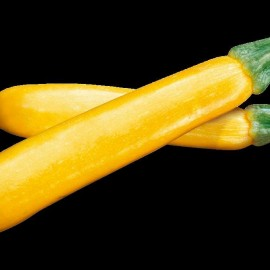 courgette jaune orelia