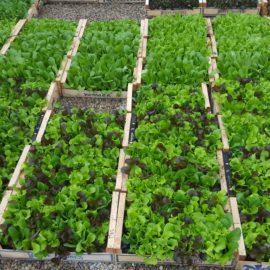 Avez-vous commencé à préparer votre jardin ?